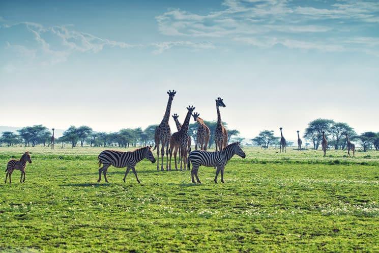 Serengeti-im-Norden-Tansanias